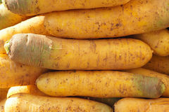 Carrot. The close-up of yellow carrot stock photography