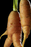 Carrot. Carot against dark background stock photos