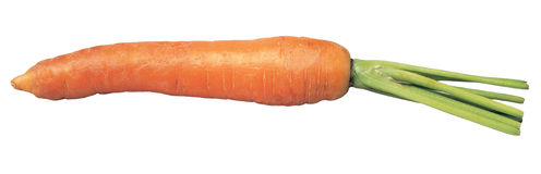 Carrot. Fresh carrot Stock Photos