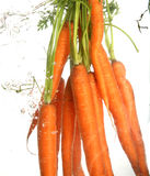 Carrot. Small display of fresh vegetable Royalty Free Stock Images