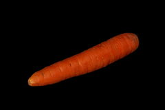 Carrot. Stock Image
