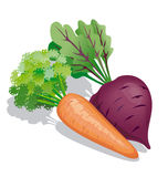 Carrot and beet Stock Image