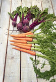 Carrot and beetroot bunch on white wood Stock Photos