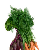 Carrot and beets Royalty Free Stock Image