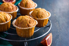 Carrot and blood orange  muffins  on dark background Stock Photography