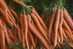 Carrot bundles. Bunches of carrots on a fruit and vegetable stall , ripe vegetables on an open air market stall Stock Image