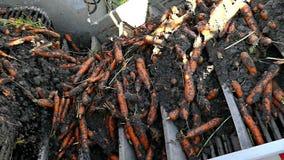Carrot on a conveyor belt stock footage