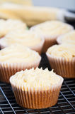 Carrot cupcakes. With cream cheese frosting Royalty Free Stock Photography