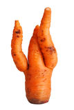 Carrot with curved spikes Stock Photography