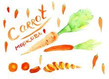 Carrot cutting. Bright carrot with the inscription `Carrots` in English. Carrot cutting. Small carrots. Watercolor Stock Photo