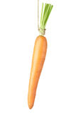 Carrot dangling on white Stock Photo