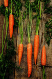 Carrot. On a dark wood background. tinting. selective focus Royalty Free Stock Images