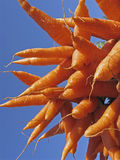 Carrot, Daucus carota var. mativue Stock Photo