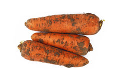 Carrot dirty in ground close up isolated on white Stock Photos