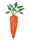 Carrot. Drawing of an isolated carrot Royalty Free Stock Photo