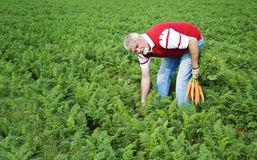 The carrot farmer Royalty Free Stock Photos