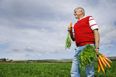 The carrot farmer Royalty Free Stock Photography