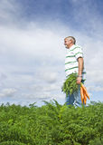 The carrot farmer Royalty Free Stock Image