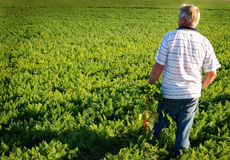 Carrot farmer Stock Images