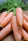 Carrot forefront Royalty Free Stock Photography