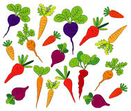 Carrot  full color and design Stock Image