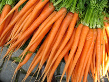 Carrot from garden stock photography