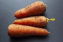 Carrot from the garden stock photos