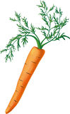 Carrot with greens Royalty Free Stock Photography