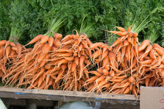 Carrot. A group of fresh carrot Stock Photography