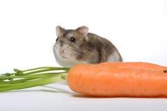 Carrot hamster