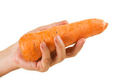 Carrot  in hand Royalty Free Stock Image