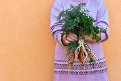 Carrot in hands Royalty Free Stock Images