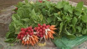 Carrot Harvest stock video