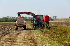 Carrot harvesting with modern agricultural equipment Stock Photos