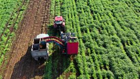 Carrot harvest in farm land. Carrot harvesting using mechanized harvesting equipment and truck to transport the carrots to a processing plant stock video