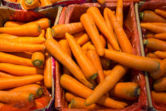 Carrot healthy diet Stock Images