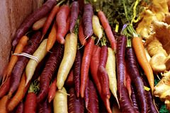 Carrot Heirloom Blood Red Vegetables stock photo