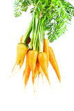 Carrot isolated Stock Images