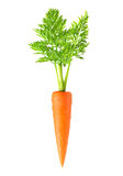 Carrot isolated Stock Photo