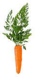 Carrot isolated on the white background Royalty Free Stock Images