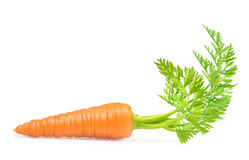 Carrot isolated on white Stock Photos