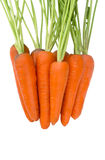 Carrot isolated on white background. Heap freshen and sweet of the carrots with stems Royalty Free Stock Image