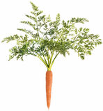 Carrot with leaf Royalty Free Stock Photography