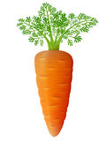 Carrot with leaves close up Stock Image