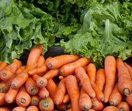 Carrot and lettuce Stock Images