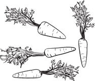 Carrot. Line drawing of a carrot. Line drawing of a carrot. On a white background. One color. Vector illustration Stock Images