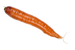 Carrot macro Royalty Free Stock Photo