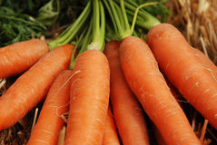 Carrot on marked stand. Fresh carrots on marked stand Royalty Free Stock Photos