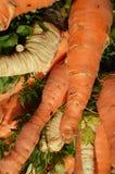 Carrot on market stock image