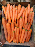 Carrot in market Royalty Free Stock Photography